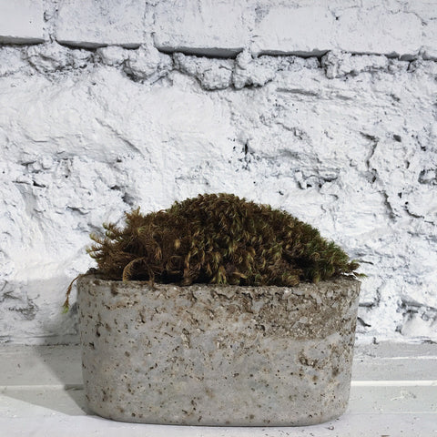 Medium Moss Plant in Hand Made Planter