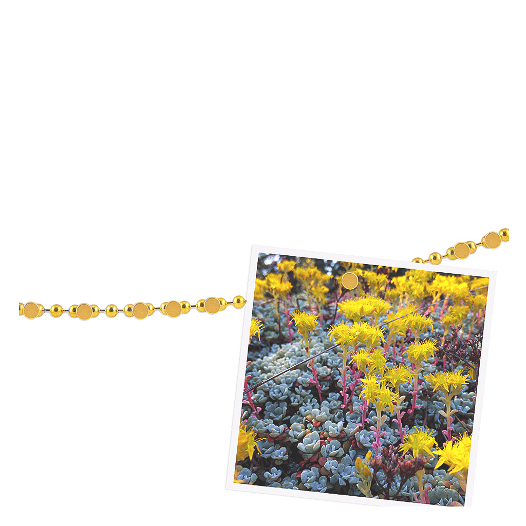 Chained up Magnetic Display, Gold