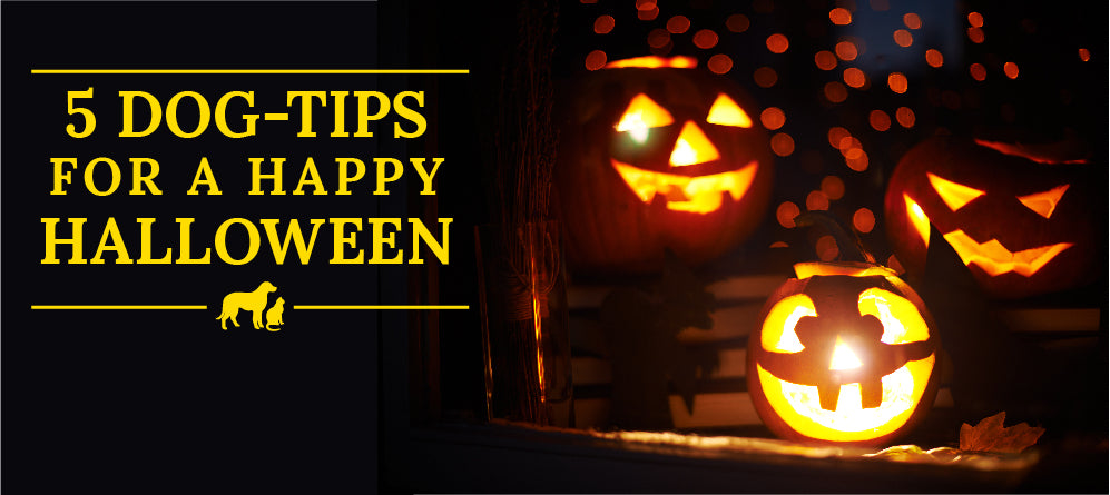 5 Dog-safety Tips for a Happy Halloween
