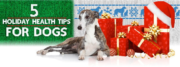 5 Holiday Health Tips for Dogs