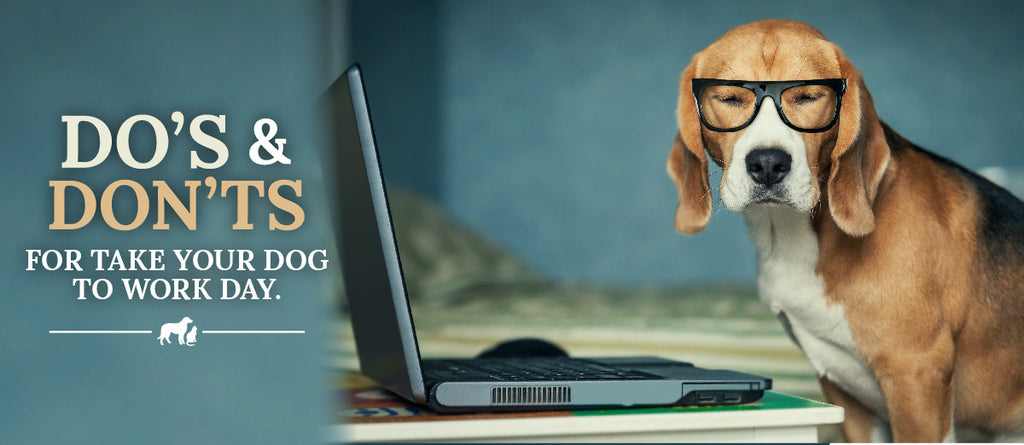 "Do's and Don'ts for ""Take Your Dog to Work Day"""