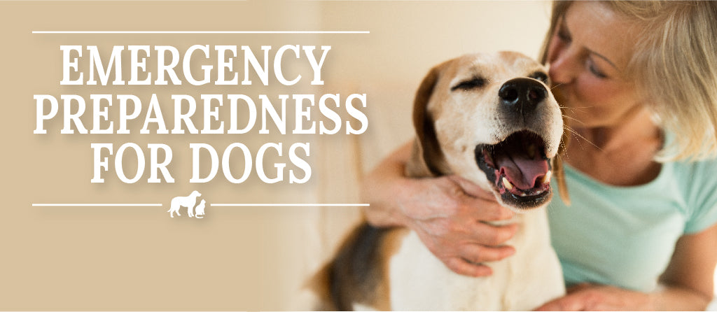 How to prepare pets for emergencies