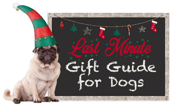 Last Minute Holiday Gift Guide for Dogs
