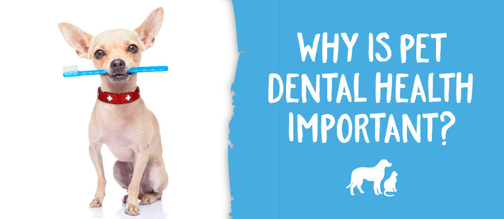 Why is Pet Dental Health important?