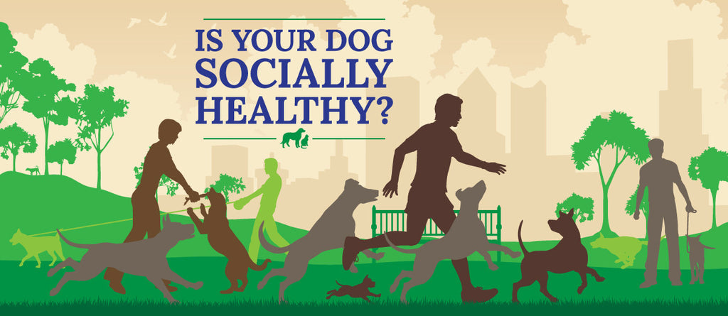 4 Steps to a socially healthy dog