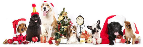 Healthy Partner Pet Snacks Holiday Tips