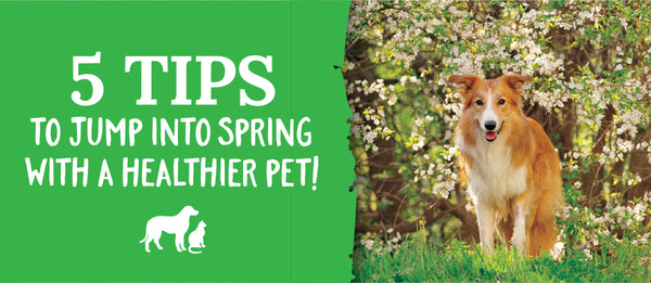 healthy partner pet treat spring health tips