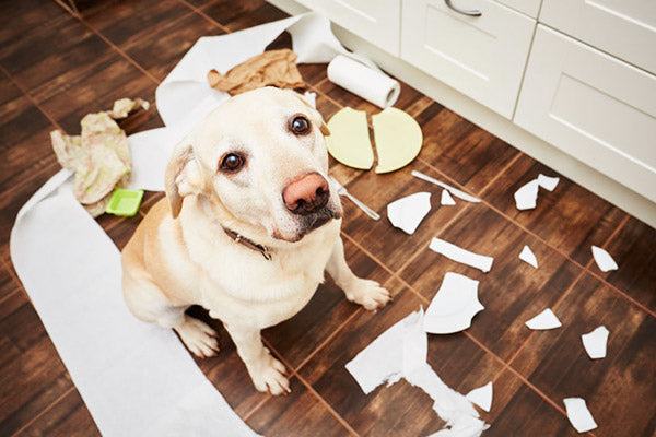 Dog chewing and making a mess