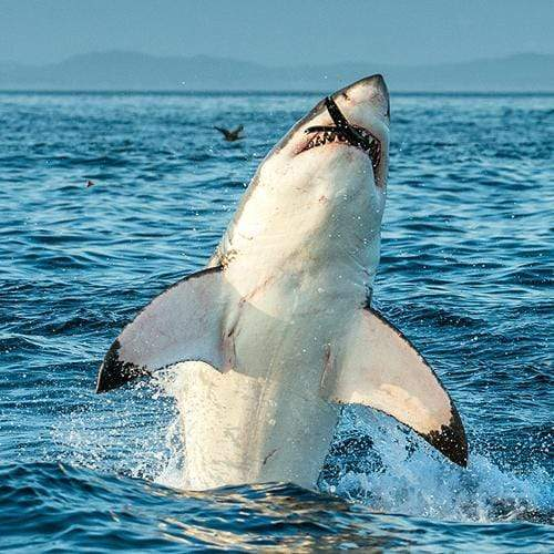 9 Shark Facts That Will Make Your Head Swim