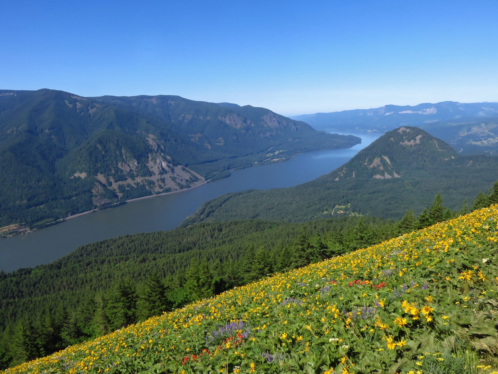 Dog Mountain at Columbia River Gorge in Washington