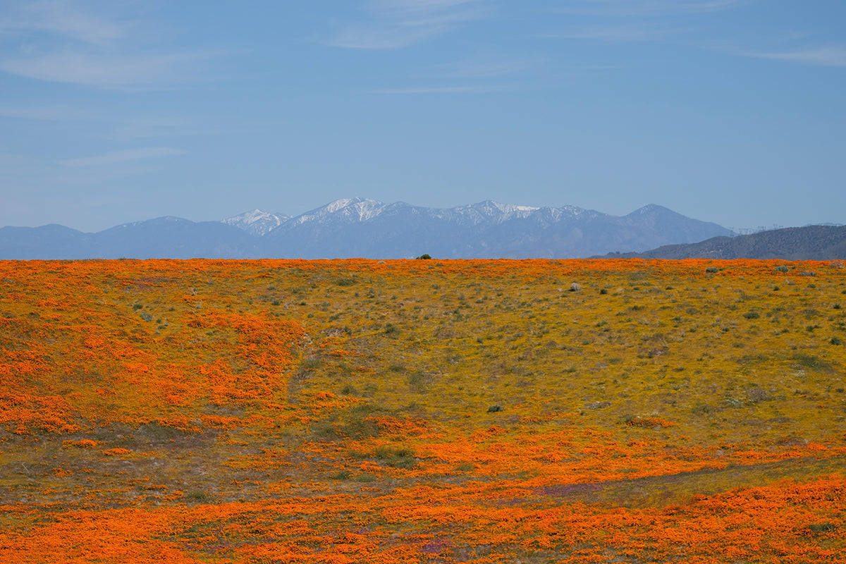 Antelope Valley California Poppy Reserve in Lancaster, CA