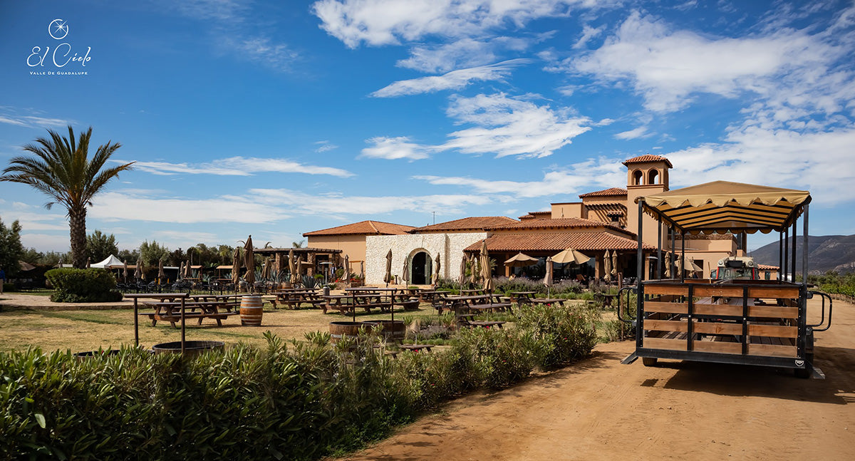Wineries to Visit in Valle de Guadalupe: El Cielo