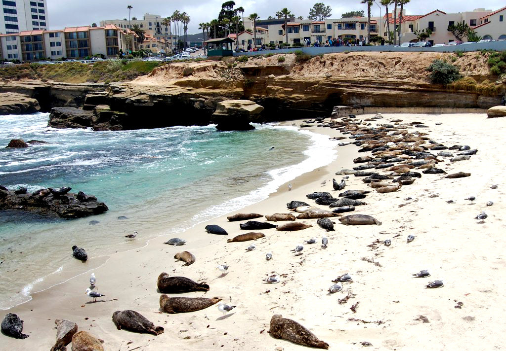 Ultimate San Diego Beach Guide: La Jolla Shores