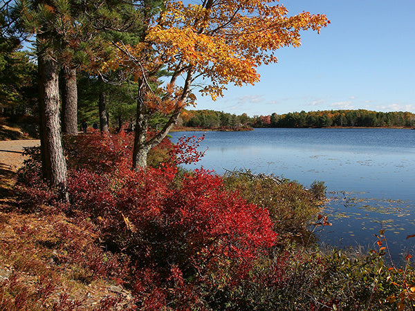 Fall foliage at Acadia National Park in Maine