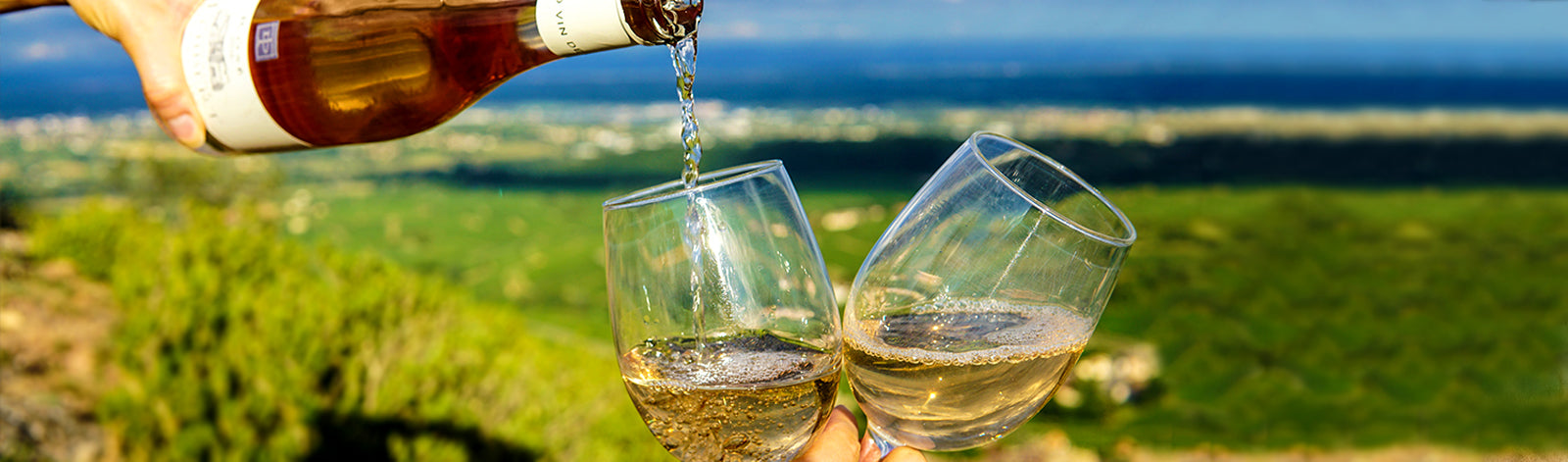 The Best Wines for Your Next Picnic