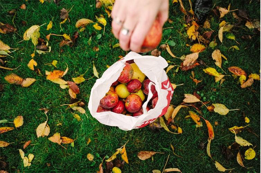 Person holding apple above a bag of apples