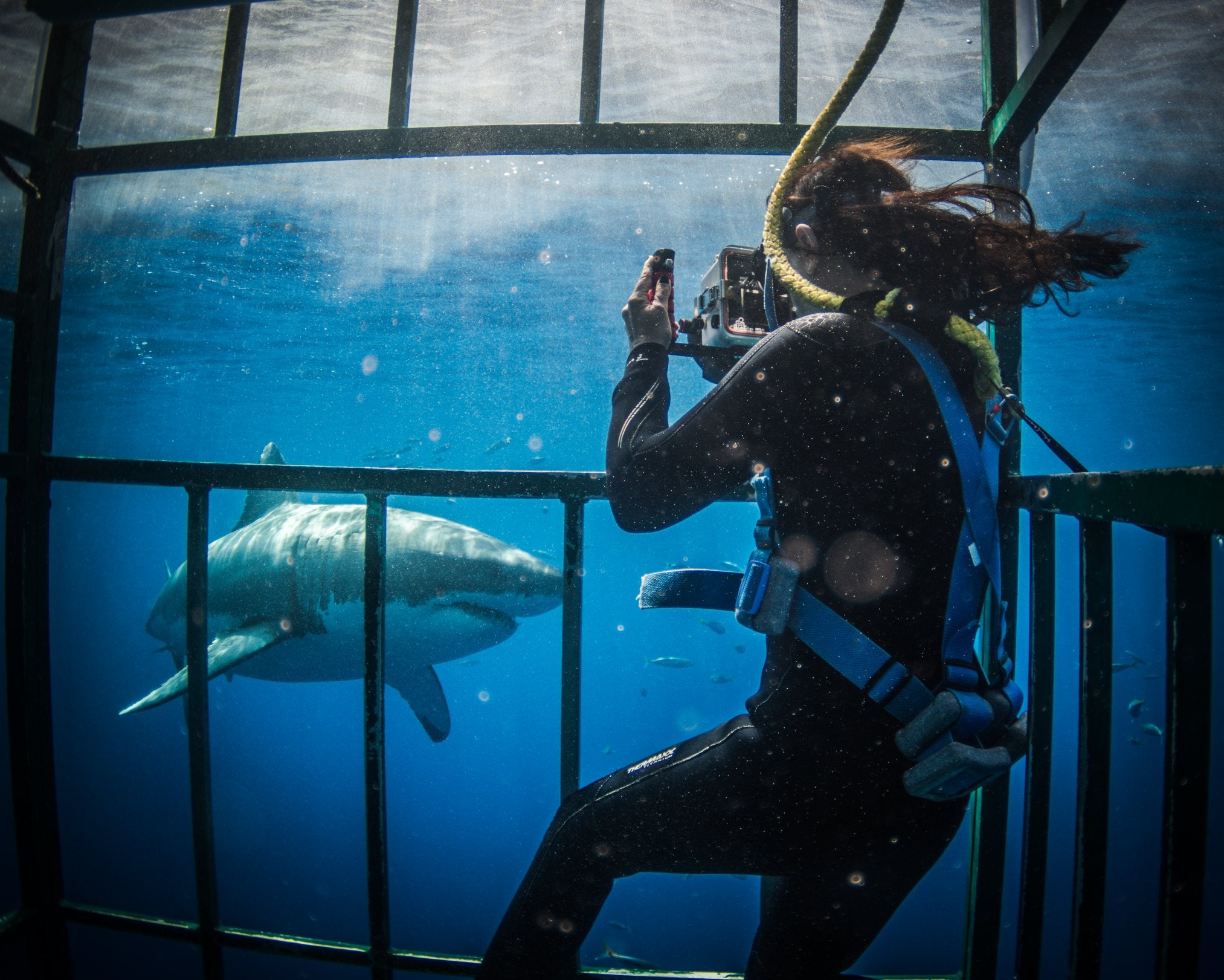 Great White Adventures shark cage diving in Baja California