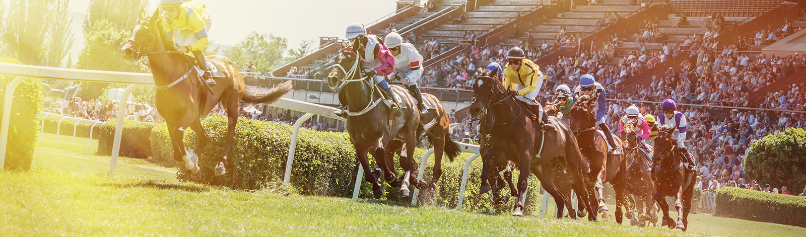 Tips to Consider for Your Next Horse Race