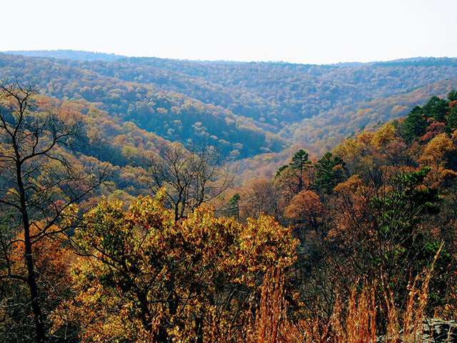 Fall foliage at Ozark National Forest in Arkansas