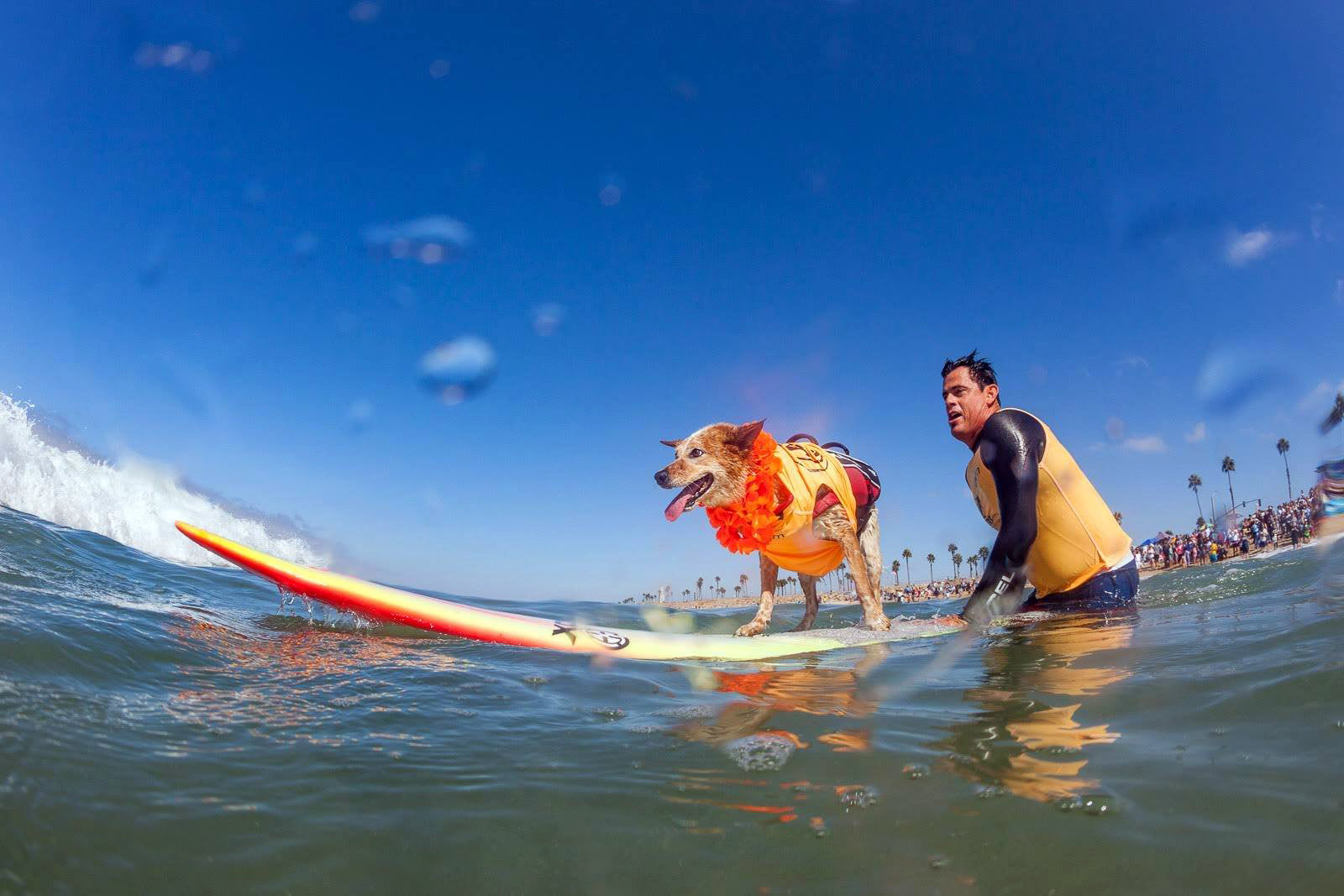 Surf Dog Events in Imperial Beach San Diego, Ca