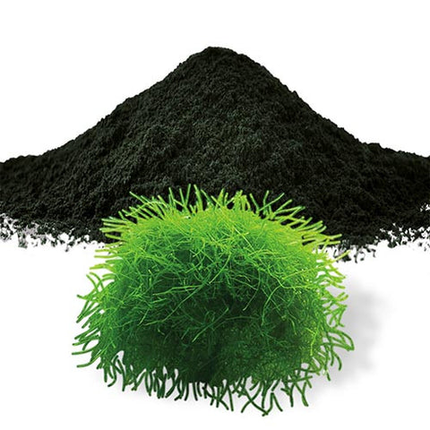 Spirulina Powder (Organic) 8oz