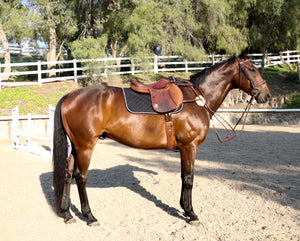 Breastplate: 5 Point Martingale