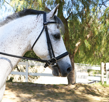 Load image into Gallery viewer, Dressage Bridle