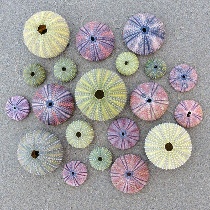Zen Art & Design Artisanal Wooden Jigsaw Puzzle, Sea Urchins, Medium