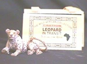 Animals In Transit Leopard