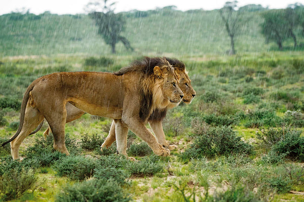 What is the best time of year to visit the Kgalagadi?