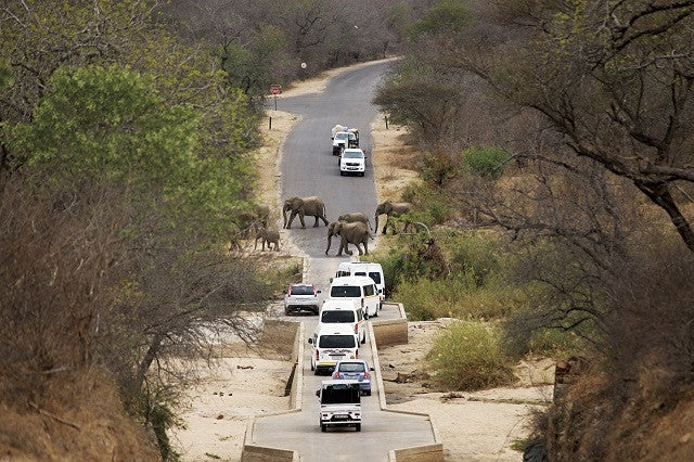 The wild roads of Kruger