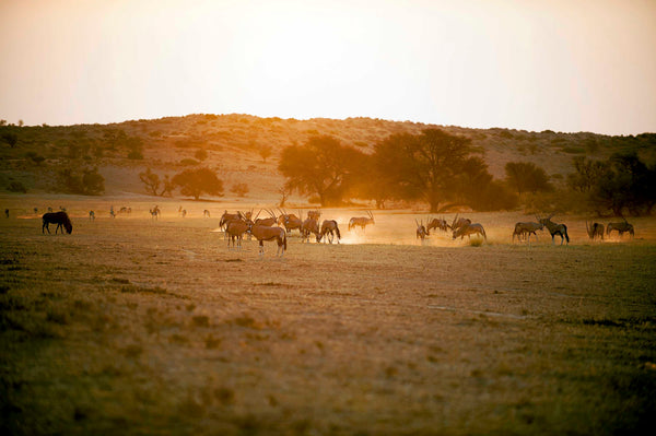 Spring in the kgalagadi