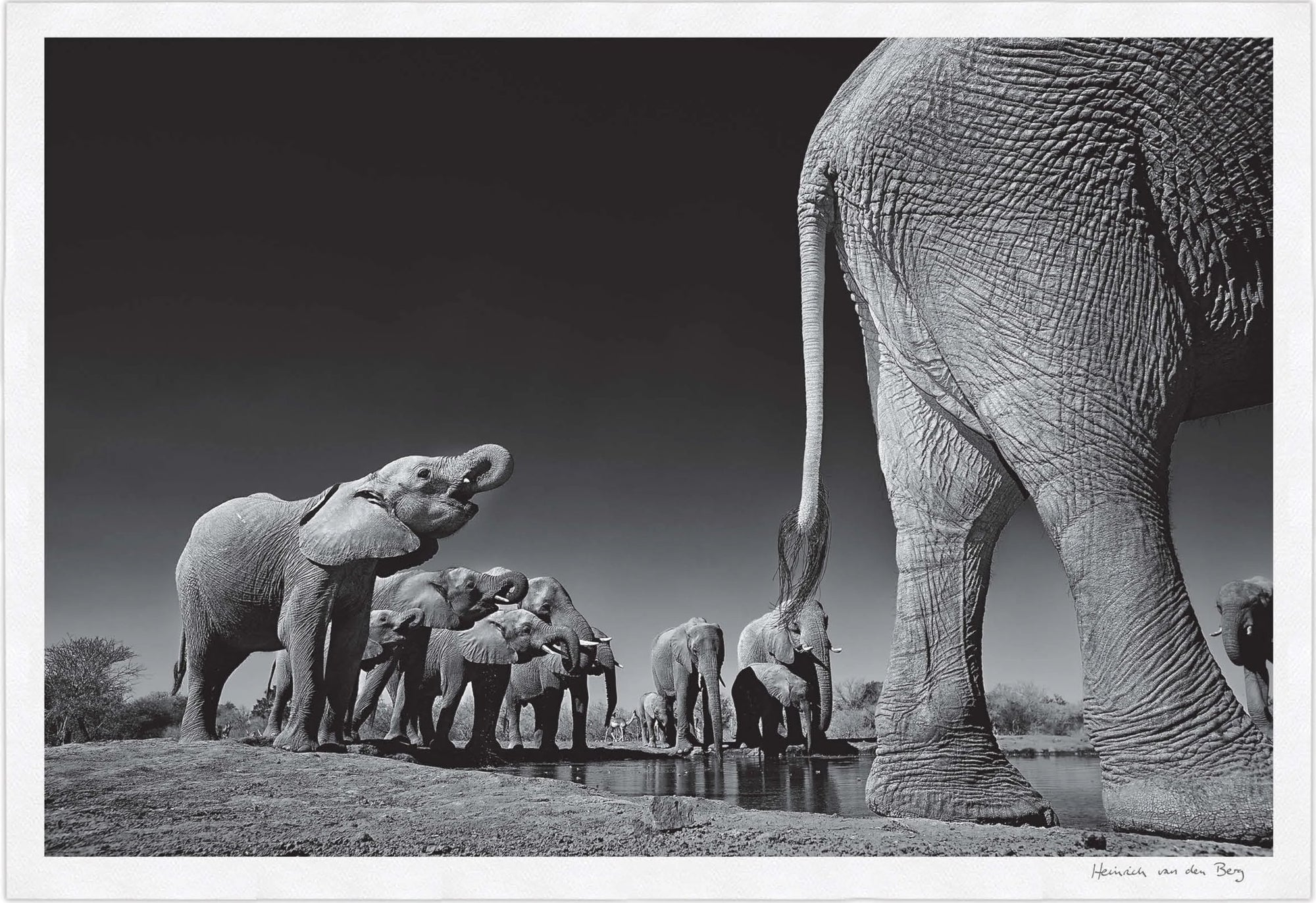 Elephant Walk Fine Art Print