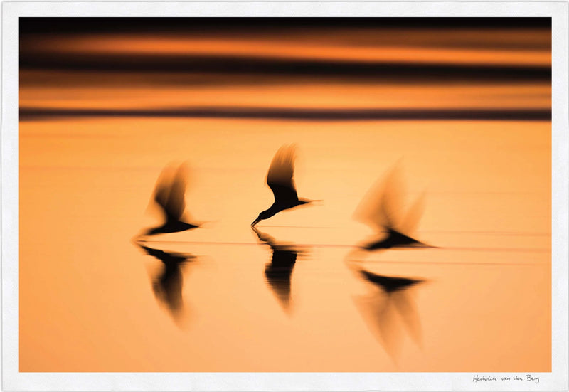 Birds at Sunset Fine Art Print
