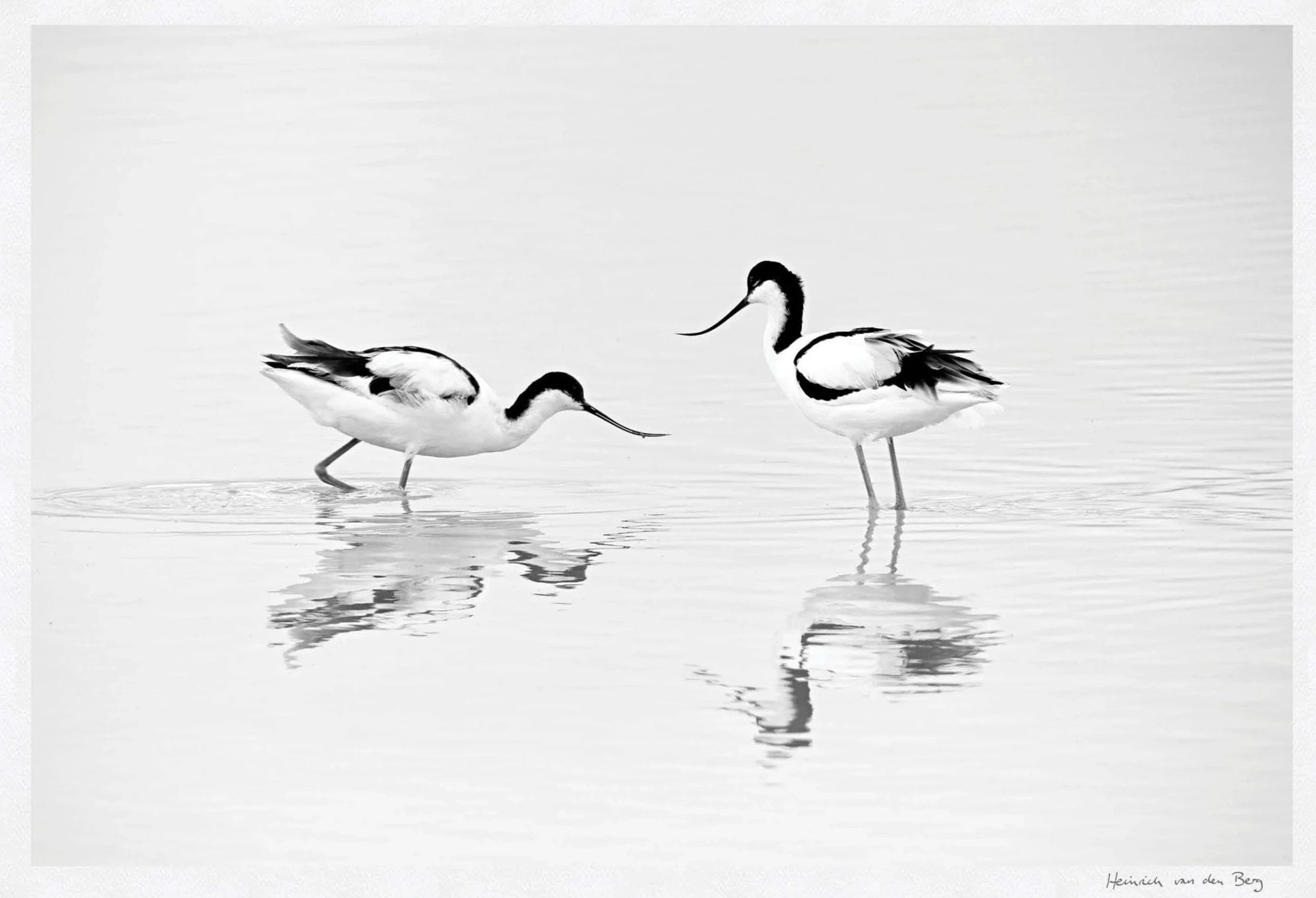 Black and White Bird Fine Art Print - HPH Publishing South Africa