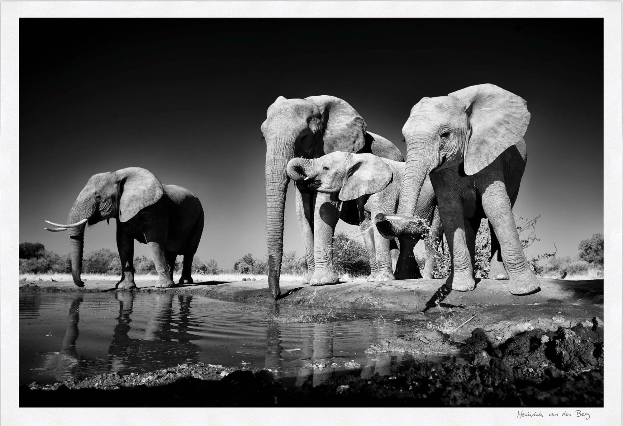 Elephants Drinking Fine Art Print - HPH Publishing South Africa