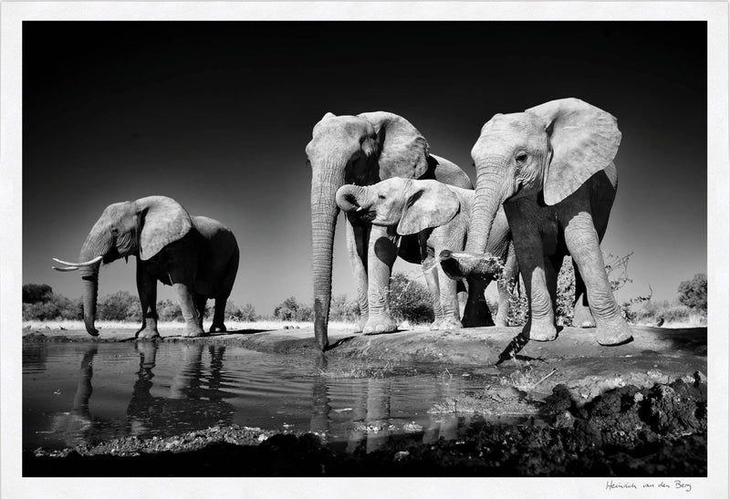 Elephants Drinking Fine Art Print