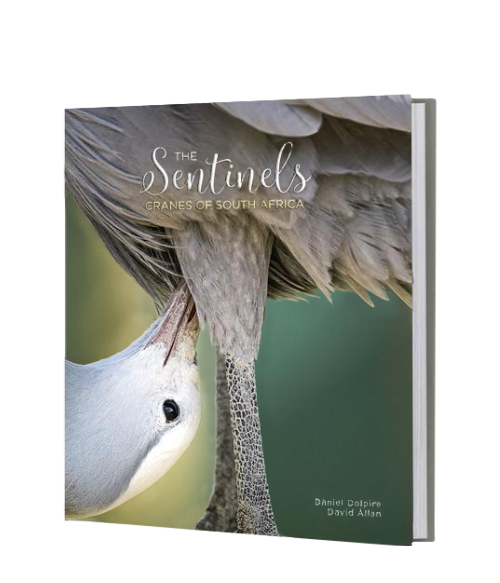 The Sentinels - Cranes of South Africa - HPH Publishing South Africa