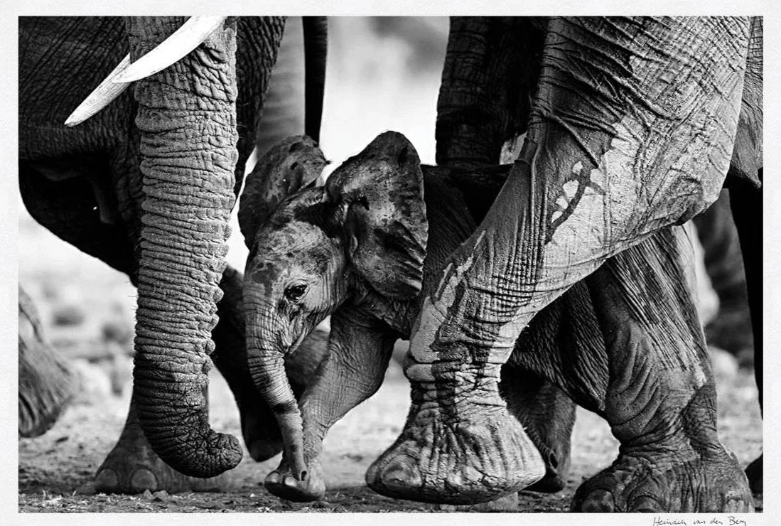 Elephant Pillars Fine Art Print - HPH Publishing South Africa