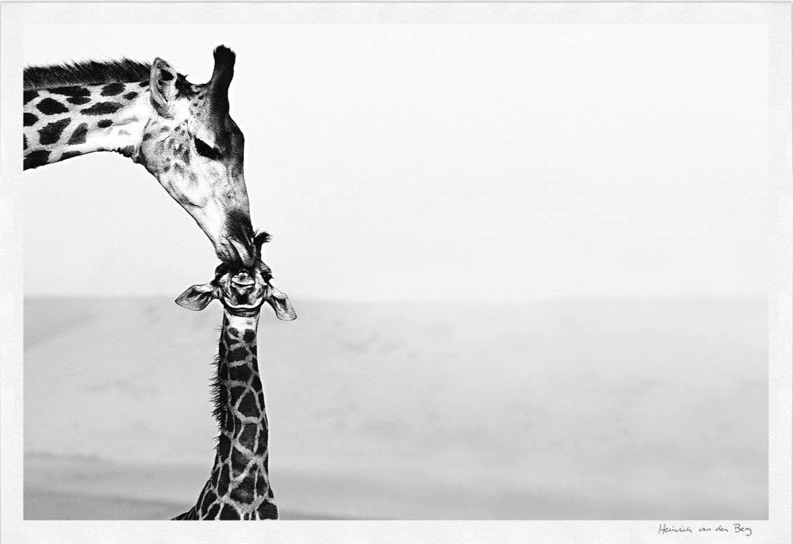 Giraffe with Young Fine Art Print - HPH Publishing South Africa
