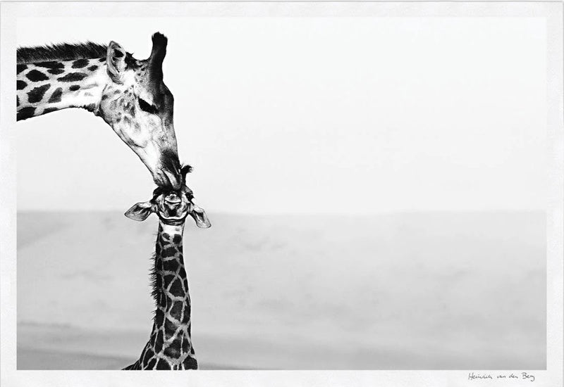 Giraffe with Young Fine Art Print - HPH Publishing