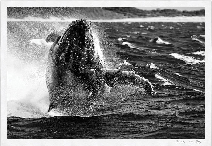Whale Limited Edition Fine Art Print - HPH Publishing