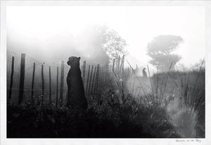 Cheetah Fence Limited Edition Fine Art Print - HPH Publishing