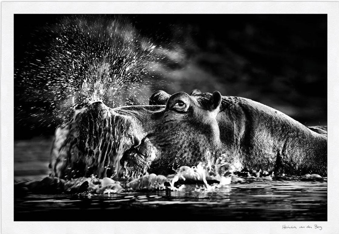 Snorting Hippo Fine Art Print - HPH Publishing South Africa