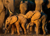 Remembering Elephants - HPH Publishing South Africa