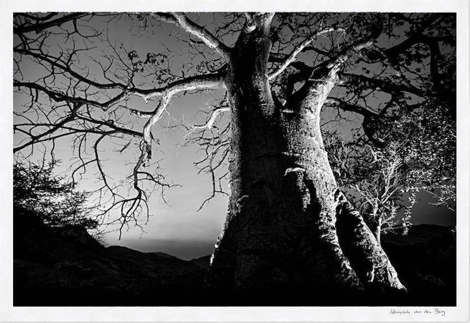 Baobab Fine Art Print - HPH Publishing South Africa