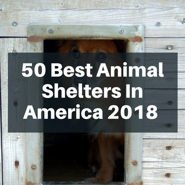 50 Best Animal Shelters In America That Need More Recognition