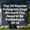 Top 20 Popular Instagram Dogs Account You Need to Be Following in 2018