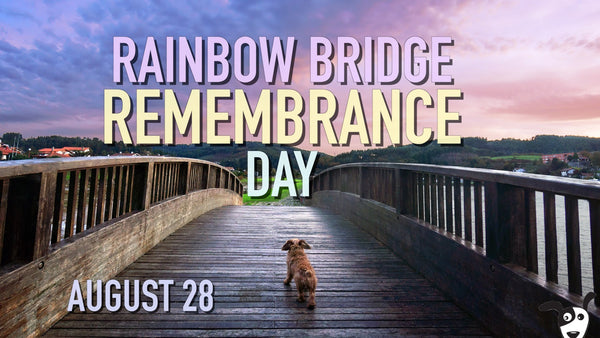 10 Ways to Remember Pets That Have Passed Away on Rainbow Bridge Remembrance Day