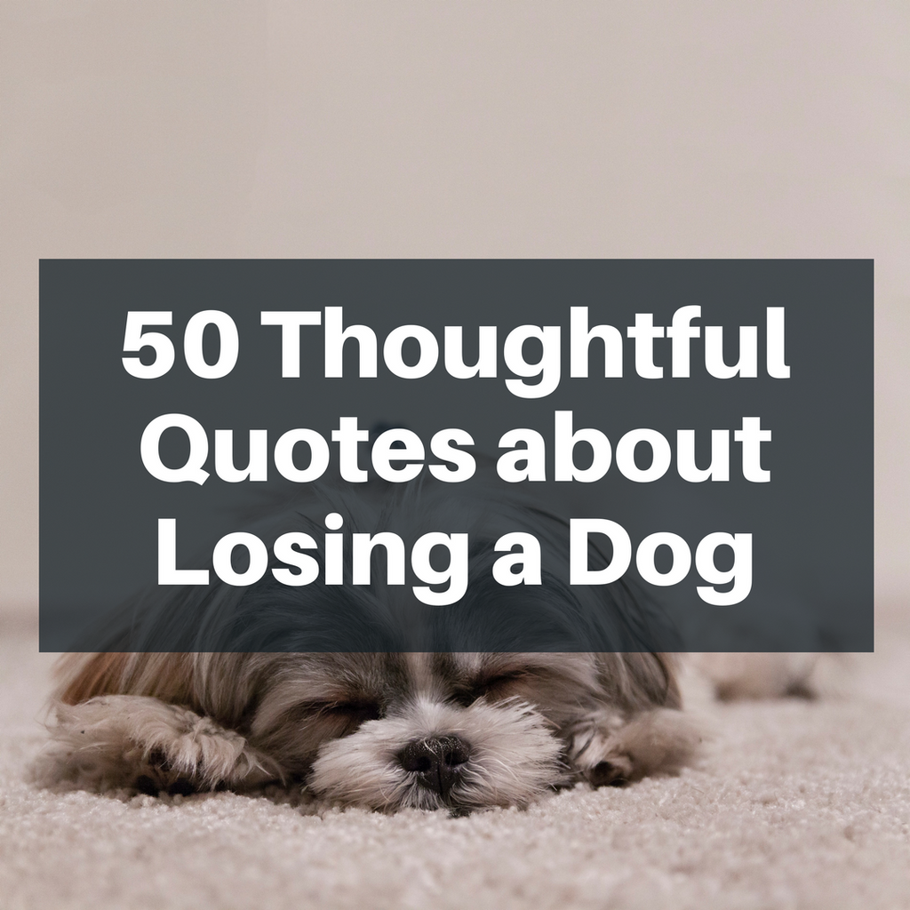 Elegant Losing Your Best Friend Dog Quotes